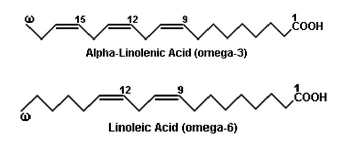 gallery omega 3 omega 6 structure